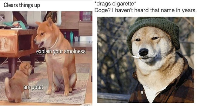 dog memes that are a bit too spicy to add to their steak dinner