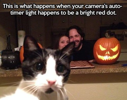 red dots photobomb Cats - 8078013696