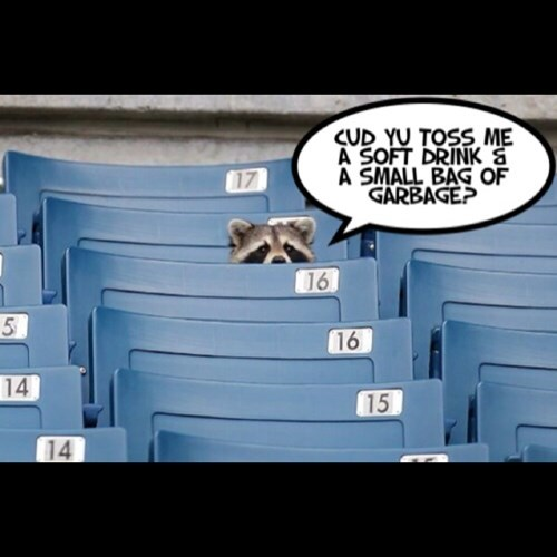 sports raccoons funny