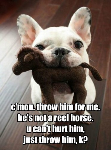 cute dogs horse fetch funny - 8078491392