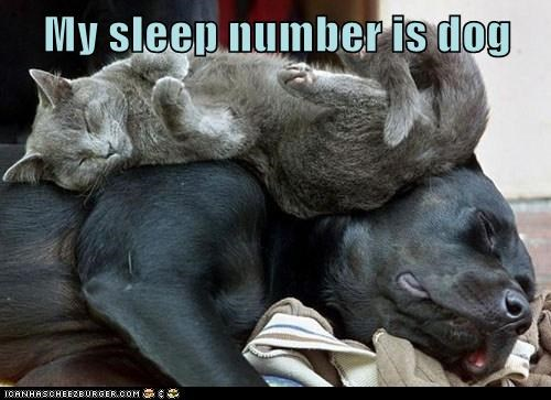 Cats dogs snuggle sleep number