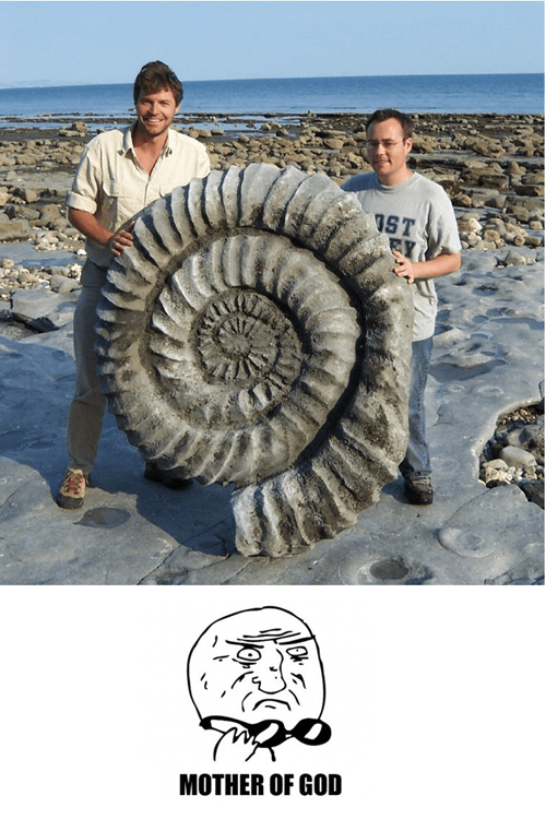 IRL,mother of god,helix fossil