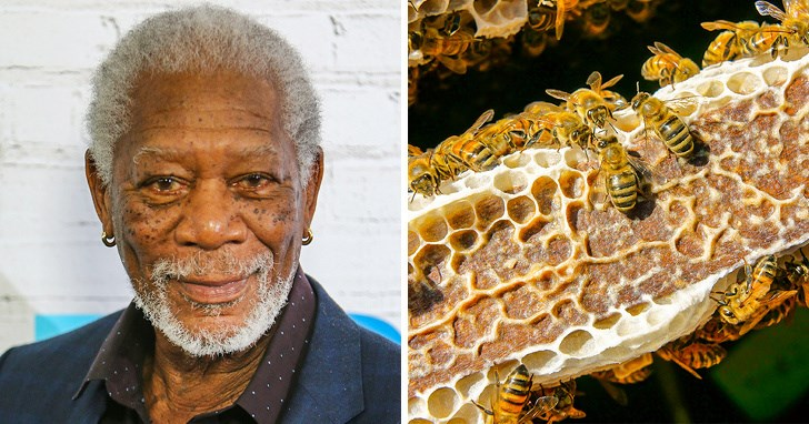 honey bees honeybee saving the planet Morgan Freeman earth - 8079365