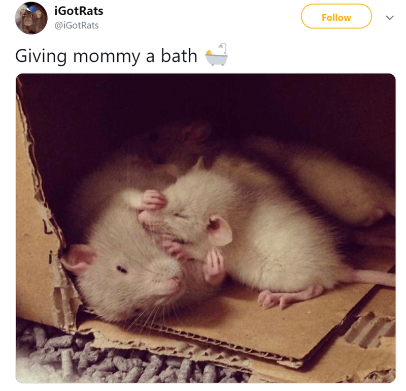cute rat things