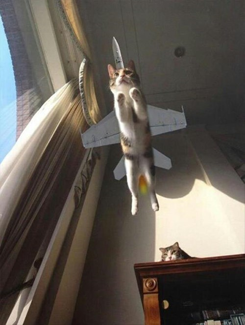 Cats,cute,flying,jets