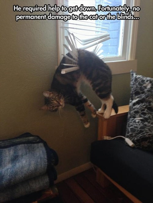 blinds Cats a little help embarrassing - 8079748864
