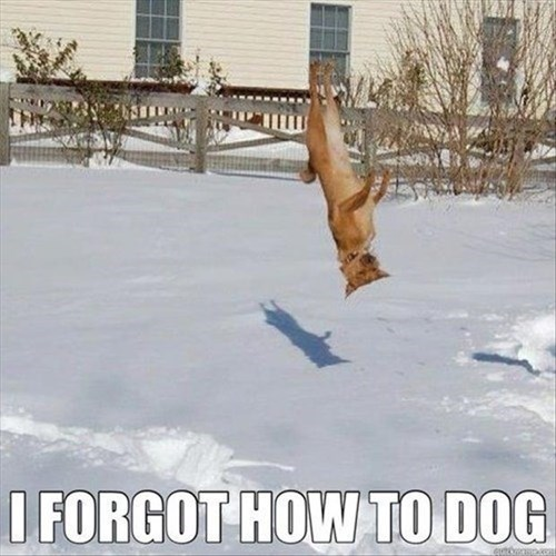 dogs excited flip snow winter - 8079786240