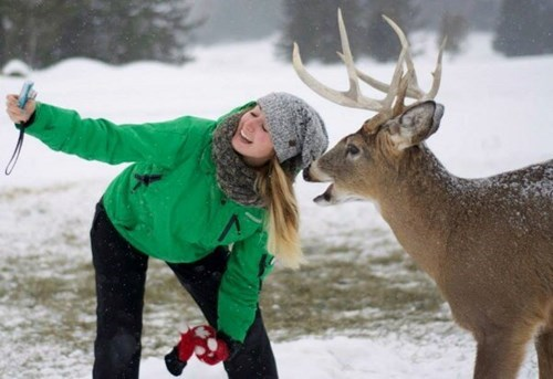 cute,deer,Photo,selfie