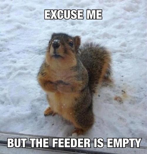 cute snow squirrels noms winter - 8079821824