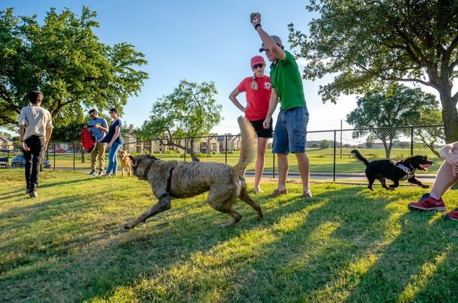 dog park dogs cities parks research - 8080389