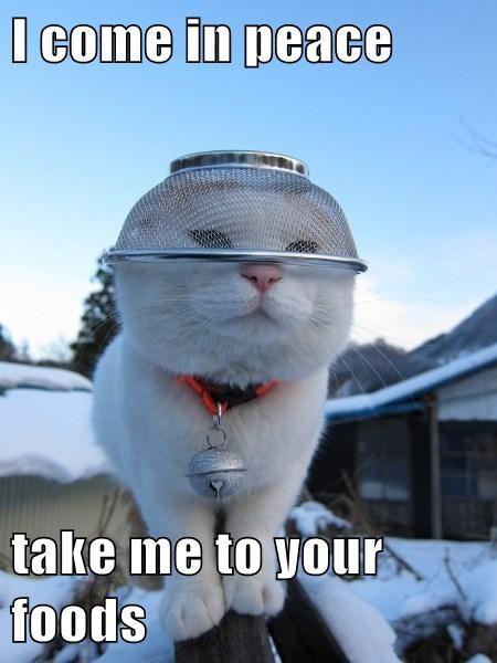 Aliens Cats funny noms - 8080523776