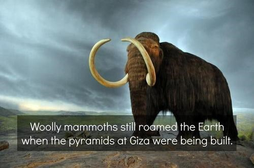 history woolly mammoth pyramids science funny