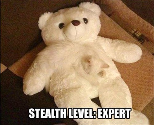 Cats cute camouflage teddy bear stealth