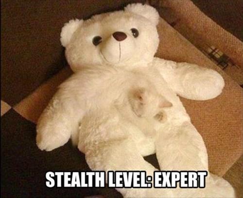Cats cute camouflage teddy bear stealth - 8080789760