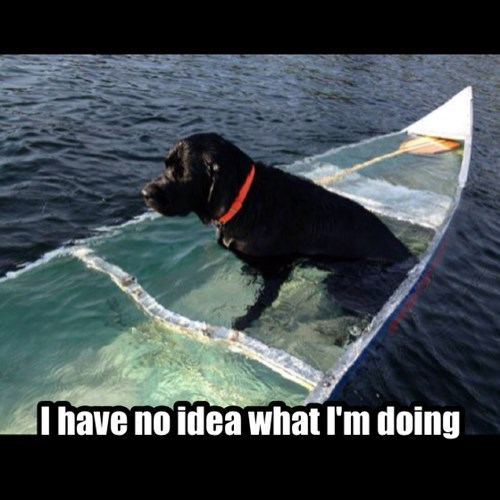 dogs funny labs water - 8080824064