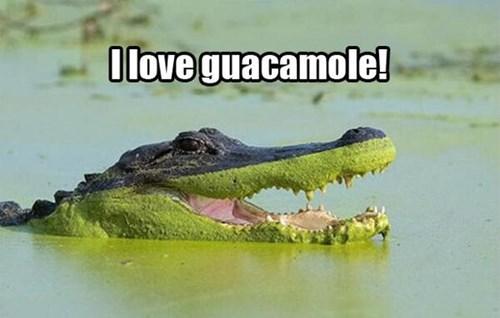 aligator guacamole green gross