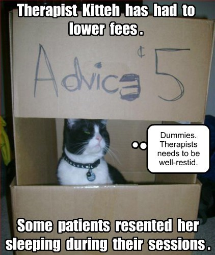 Cats funny therapy - 8080999680