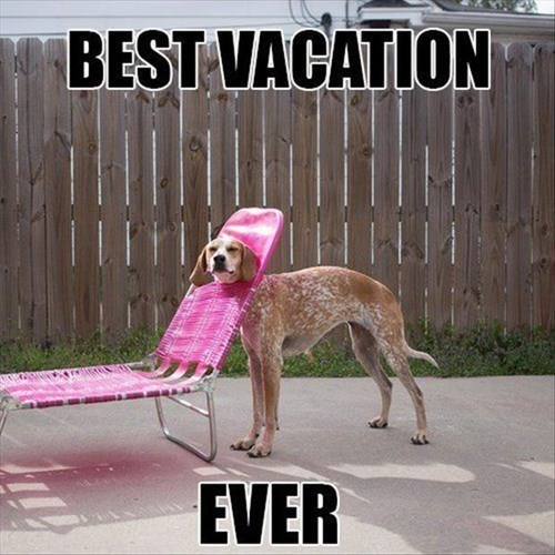 dogs sarcasm vacation - 8081000448