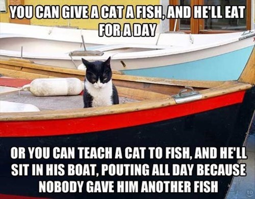 Cats boats fishing funny - 8081001216