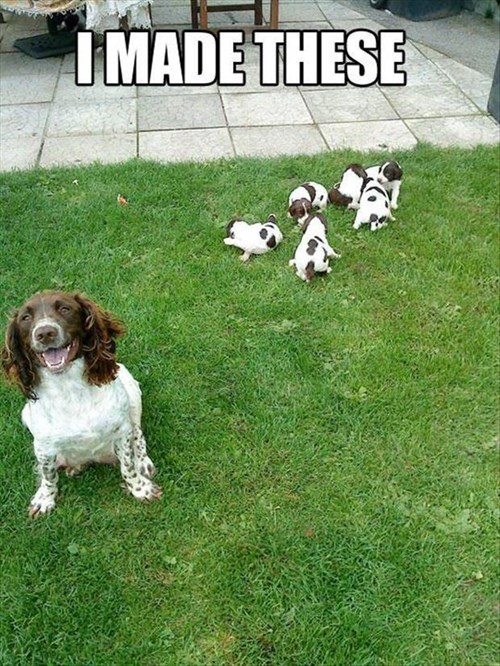 cute,dogs,puppies,mama