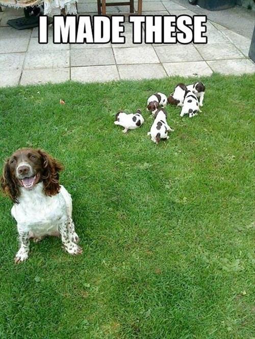 cute puppies mama - 8081004288