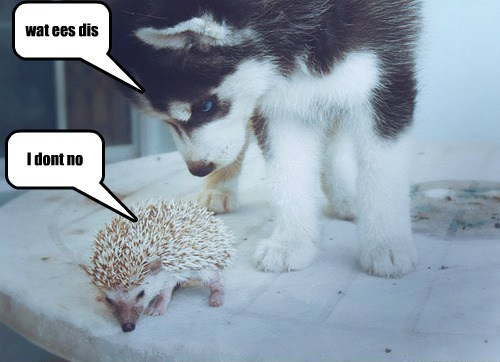 cute funny puppies hedgehogs - 8081121024
