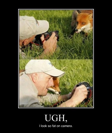 awesome animals fox funny vain