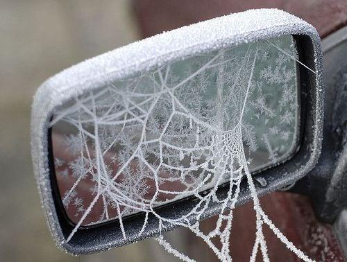 nope spiders winter - 8081202688