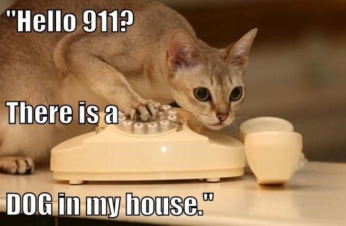 911 Cats dogs funny - 8081342208