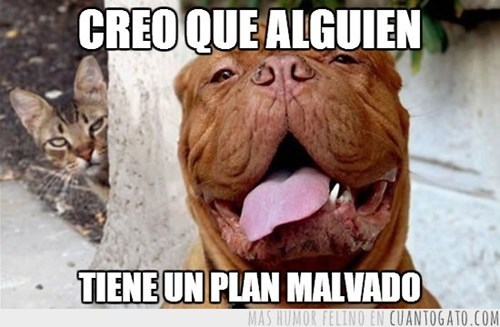 Memes animales gatos perros - 8081874432