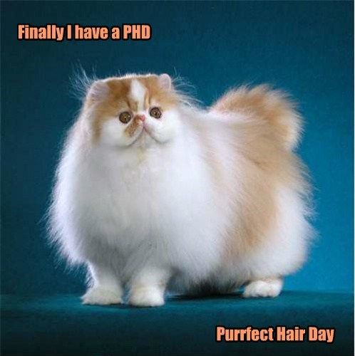 hair,phd,puns,Cats
