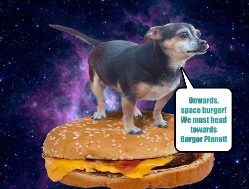 dogs I Can Has Cheezburger outerspace - 8082201600