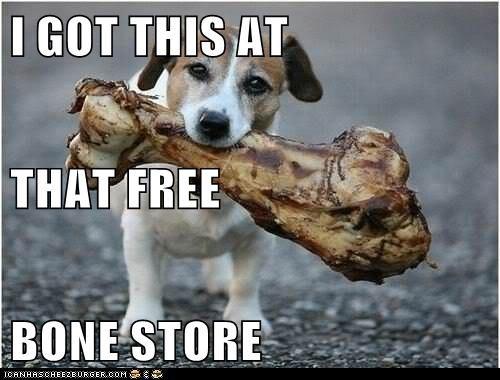 dogs bones funny - 8082298880