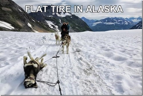 alaska,dogs,funny,dog sled,flat tire