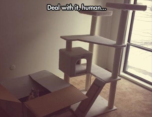 cat tree Cats boxes if i fits i sits - 8082329344