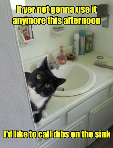 sink Cats funny - 8082493184