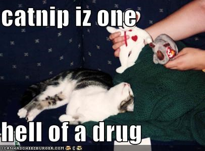 catnip iz one  hell of a drug