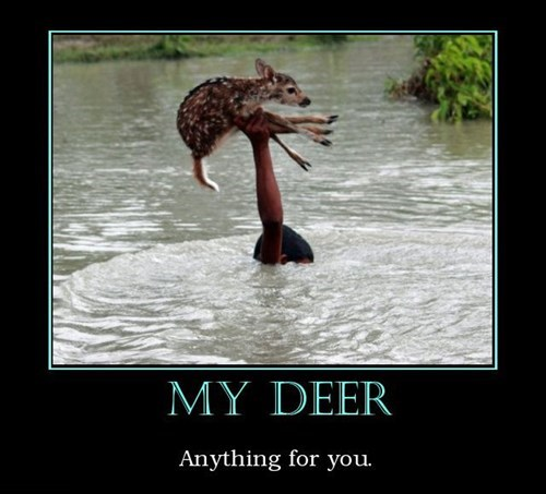 animals deer funny love - 8083447808