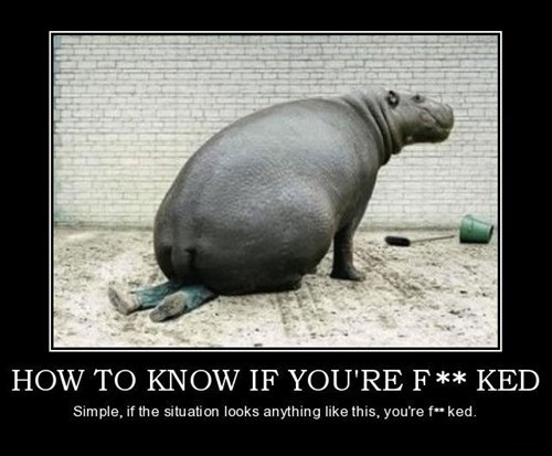 animals hippos funny screwed - 8083460352