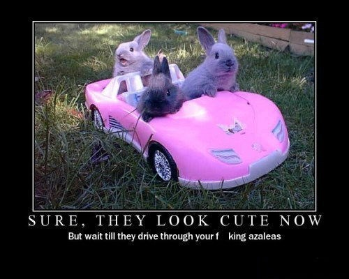 driving,funny,rabbits,jerks