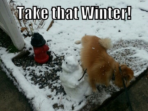 dogs,snow,winter