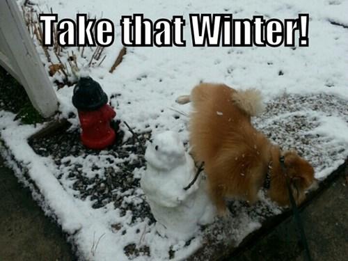 dogs snow winter - 8083675392
