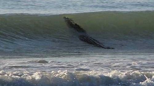 australia Damn Nature U Scary crocodile Probably bad News fail nation g rated - 8083707392