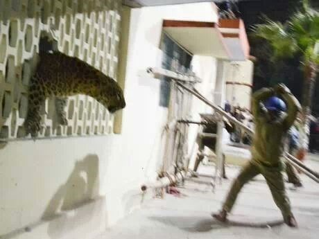 news zoo animals - 8083920640