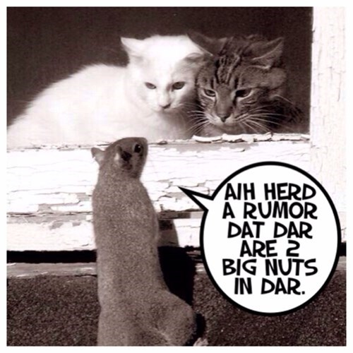 squirrels nuts Cats - 8083933952