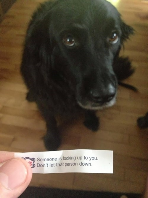 fortune cookie dogs funny - 8083989248