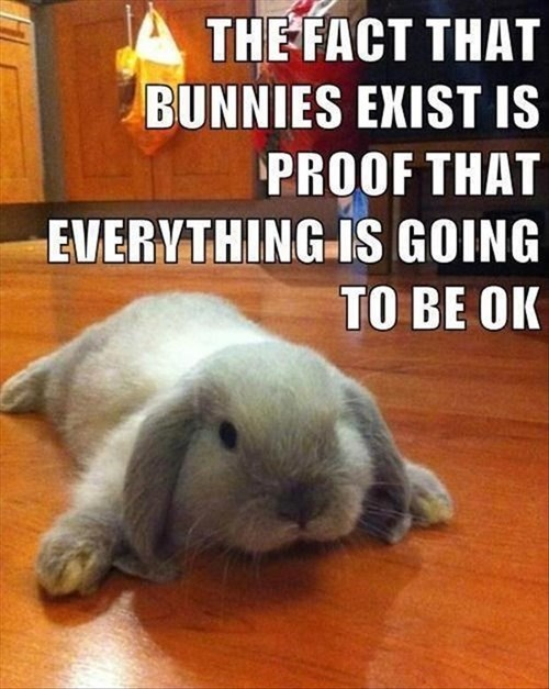 bunnies life cute - 8083996416