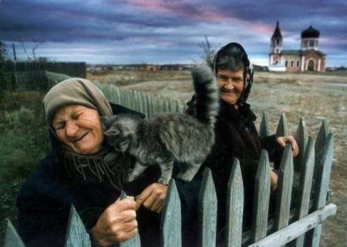 kitten cute love - 8084041472