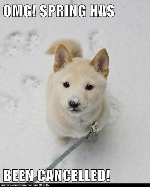 dogs,spring,snow,winter