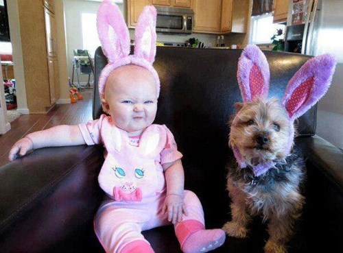 easter dogs bunny ears baby parenting - 8084937472